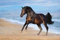 Koń na seashore zdjęcie royalty free