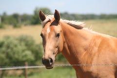 koń na wieś Zdjęcie Stock