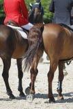 koń najeźdźcy Obrazy Royalty Free