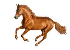 Koń odizolowywający Obrazy Royalty Free