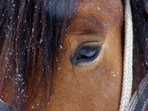 koń oko Zdjęcie Royalty Free