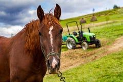 Koń pasa na halnej łące Zdjęcia Royalty Free