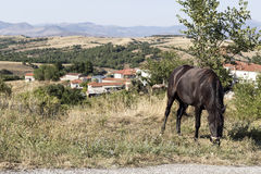 Koń pasa przy drogą zdjęcia stock