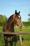 koń pola zieleni koń Fotografia Stock
