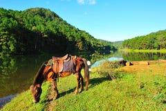 Koń przy Ssanie w żołądku jeziorem fotografia stock