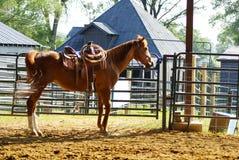 Koń przy stajenkami Fotografia Royalty Free
