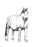 Koń, ręka rysunek Obrazy Royalty Free