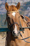 koń TARGET1660_0_ poczta zdjęcia stock