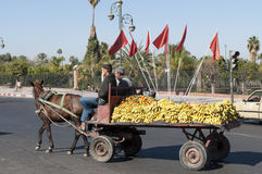 Koń tonie fracht w Marrakesh Zdjęcia Stock
