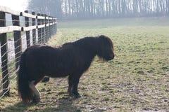 Koń w łące Obraz Stock