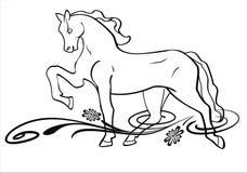 Koń w łące Zdjęcia Royalty Free