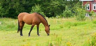Koń w łąkach zbliża dom wiejskiego Obrazy Stock