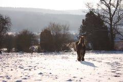 Koń w śnieżnej łące Zdjęcie Royalty Free