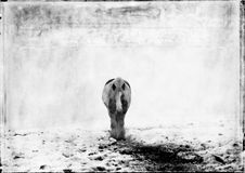 Koń w śniegu Zdjęcie Royalty Free