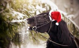 Koń w czerwieni Święty Mikołaj kapeluszu je jedlin gałąź Zdjęcia Royalty Free