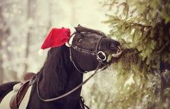 Koń w czerwieni Święty Mikołaj kapeluszu je jedlin gałąź Fotografia Stock