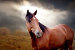 Koń w jesień Fotografia Stock