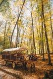 Koń w jesieni górach obraz royalty free