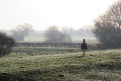 Koń w mgliste zimy śródpolne będący ubranym żakiet obraz stock