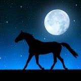 koń w nocnym niebie Obrazy Royalty Free
