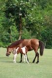 Koń w parku Fotografia Royalty Free
