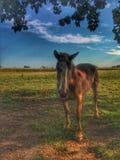 Koń w polu zdjęcia royalty free