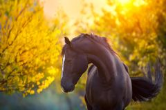 Koń w spadku obrazy stock