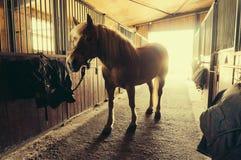 koń w stajence fotografia royalty free