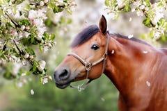 Koń w wiośnie Zdjęcie Royalty Free