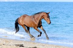 Koń w wodzie Zdjęcia Stock