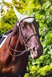 Koń z ładnym uzda portretem obraz stock