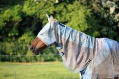Koń z komarnicy maską i dywanikiem obrazy royalty free