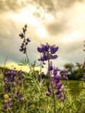 Końcówka dnia Chmurny widok kwiat zdjęcia stock