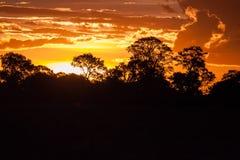 Końcówka dzień, zmierzch za drzewami w Afryka Zdjęcia Stock