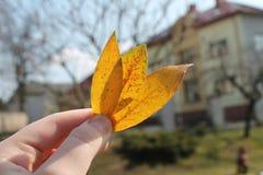 Końcówka jesień Zdjęcia Stock
