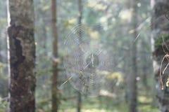 Końcówka lato w lesie blisko Moskwa, rozciągająca między drzewami, łapać w pułapkę pająka ` s sieć Obrazy Royalty Free