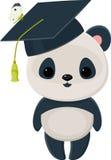 Kończąca studia panda Obrazy Royalty Free