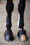 Końscy kopyta frontowych nóg zamknięty up Obraz Royalty Free