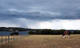 Końska łasowanie trawa na Churchill wyspy dziedzictwa gospodarstwie rolnym zdjęcie stock