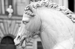 końska Florence statua Italy Tuscany zdjęcia stock
