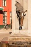 Końska głowa Pije fontannę Zdjęcie Royalty Free