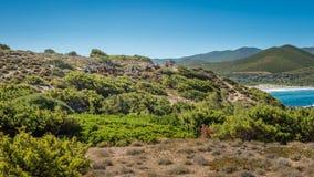 Końska jazda blisko Ostriconi w północnym Corsica Obrazy Stock
