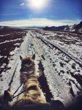 Końska jazda w Gorkhi Terelj parku narodowym, Mongolia obrazy royalty free