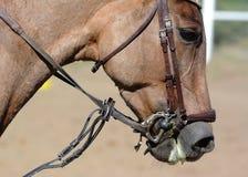 Końska uzda, uzdeczka Koński usta Equestrian sport w szczegółach zdjęcia stock