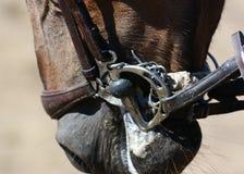 Końska uzda, uzdeczka Koński usta Equestrian sport w szczegółach Obraz Royalty Free