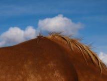 Koński abstrakt zdjęcia stock
