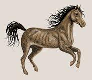 Koński artystyczny rysunek Obrazy Royalty Free