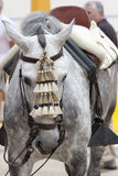 Koński biały andalusian zdjęcie stock