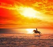 Koński bieg na plaży Fotografia Royalty Free