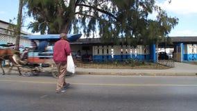 Koński fracht na ulicie zbiory wideo